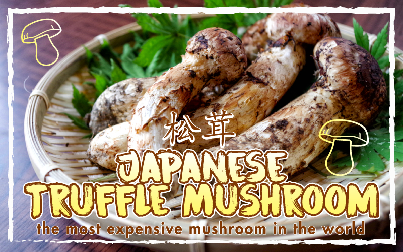 Most expensive mushroom in the world plus 60% Off Autumn Sushi Omakase